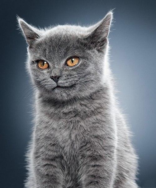 улыбка кота.jpg
