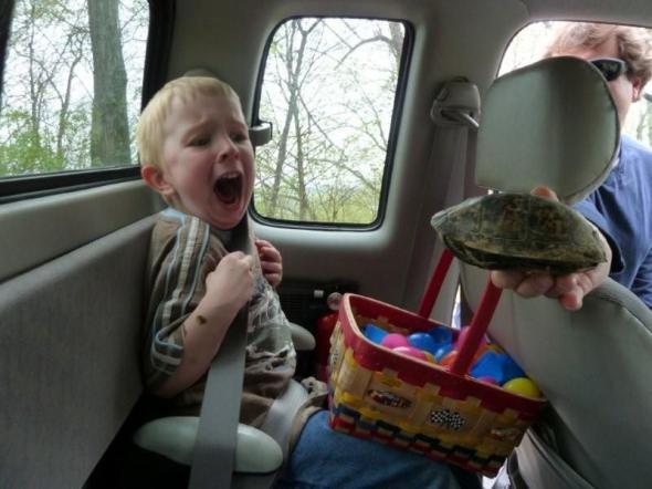 черепаха.jpg