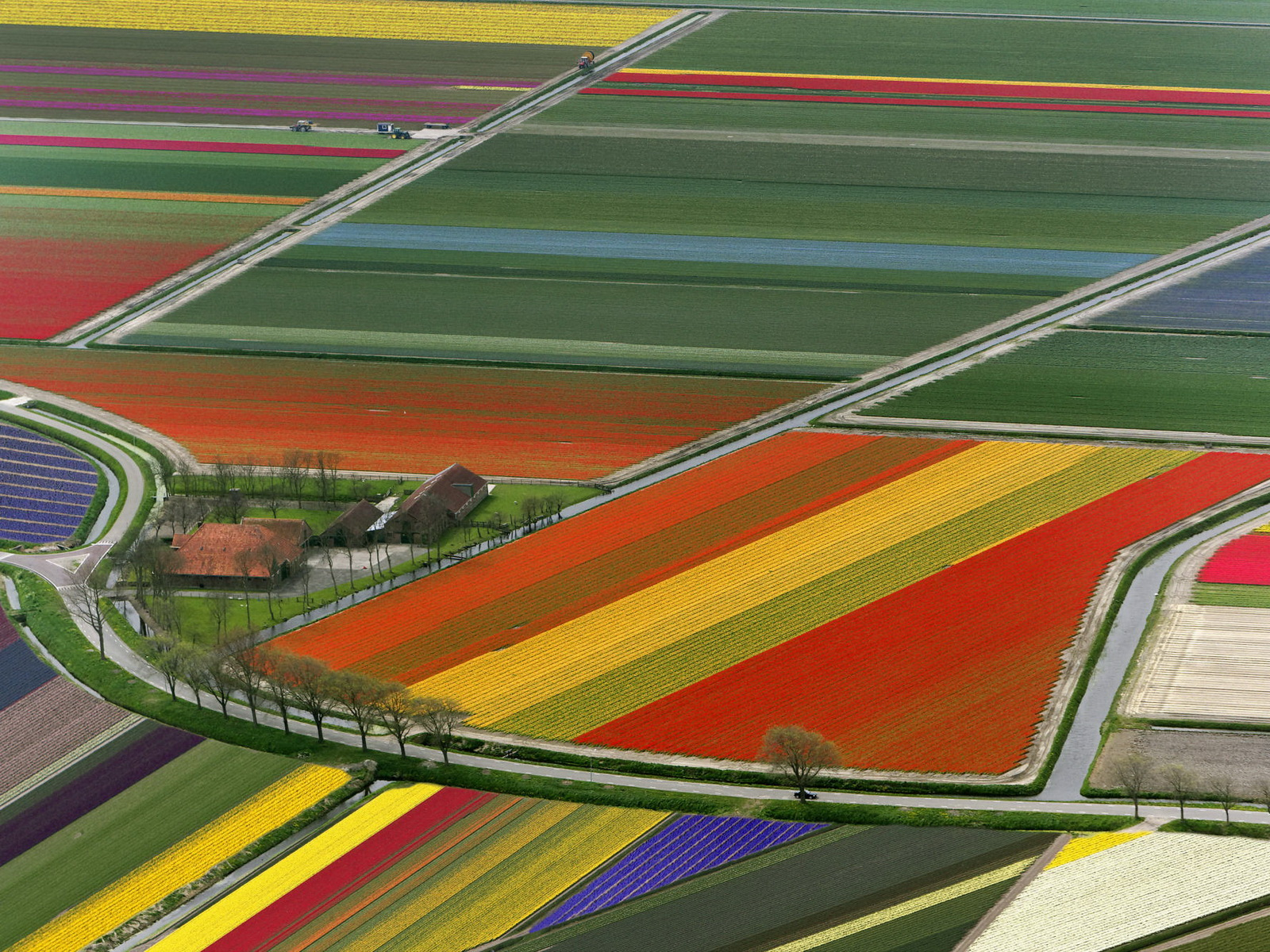1270973722_aerial-view-of-tulip-flower-fields-amsterdam-the-netherlands.jpg