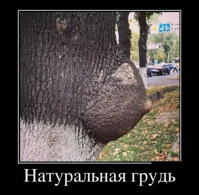1381078170_novye-demotivatory-21.jpg