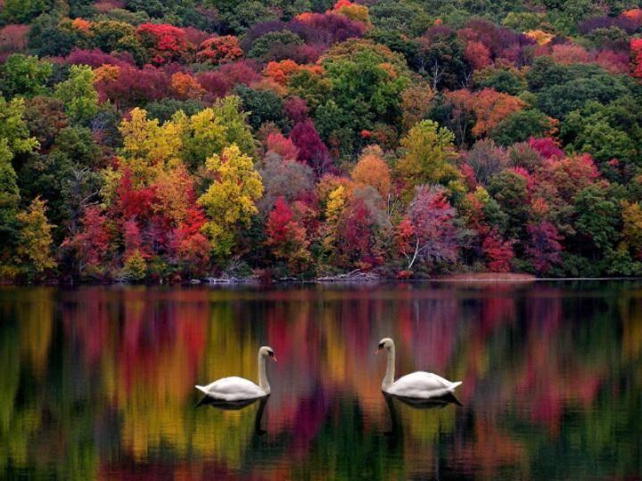 371042-nature-autumns-natural-beauty.jpg