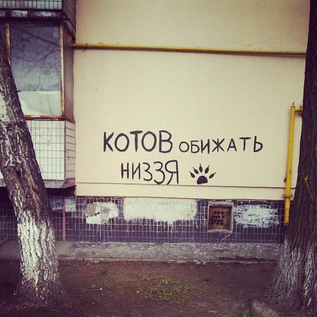 4701654_1000.jpg