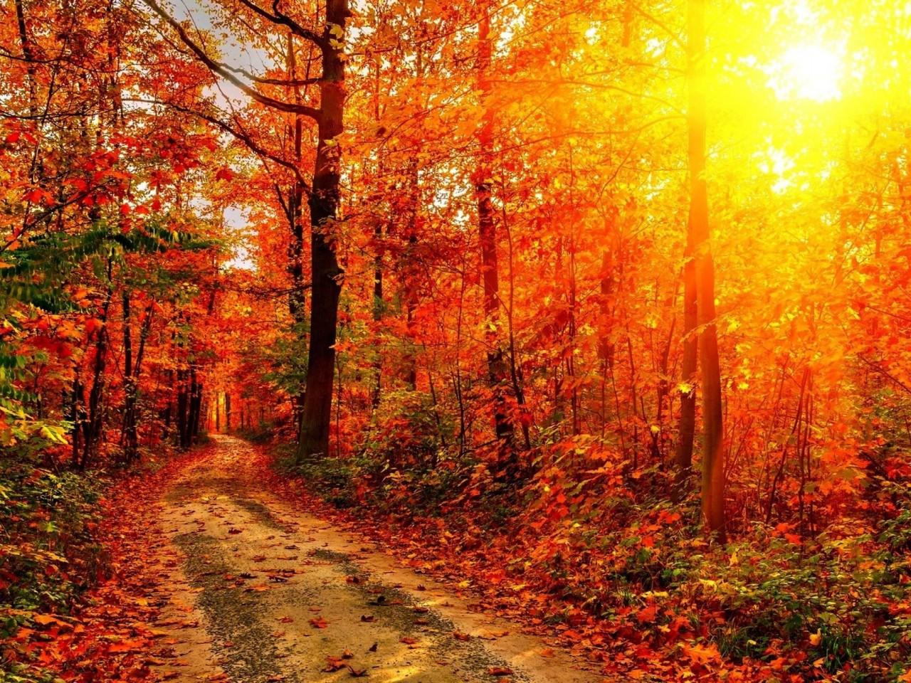 Autumn-Sun-2560x1600-1280x960.jpg