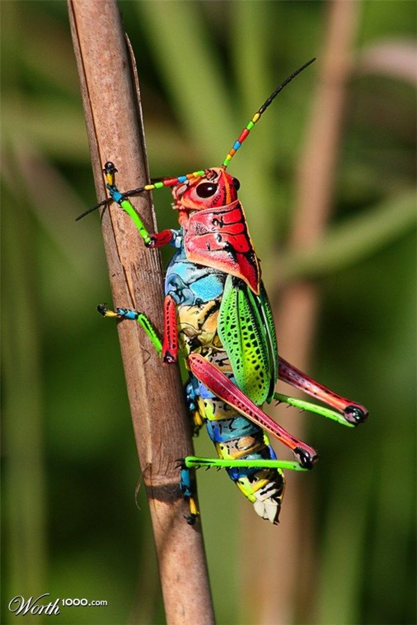 Beautiful-insects-Pictures-22.jpg
