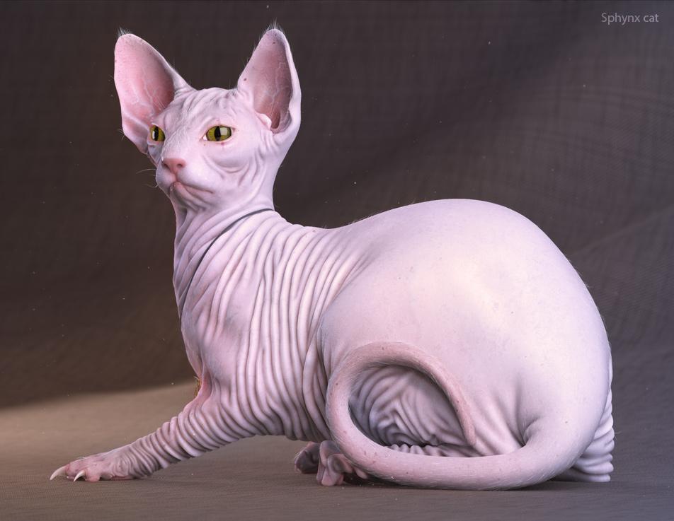Cat_texel_02.jpg