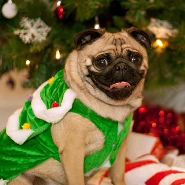 christmas-tree-dog-costume-22020.jpg