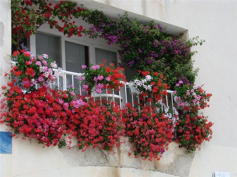 dlya-balkona-cvety.jpg