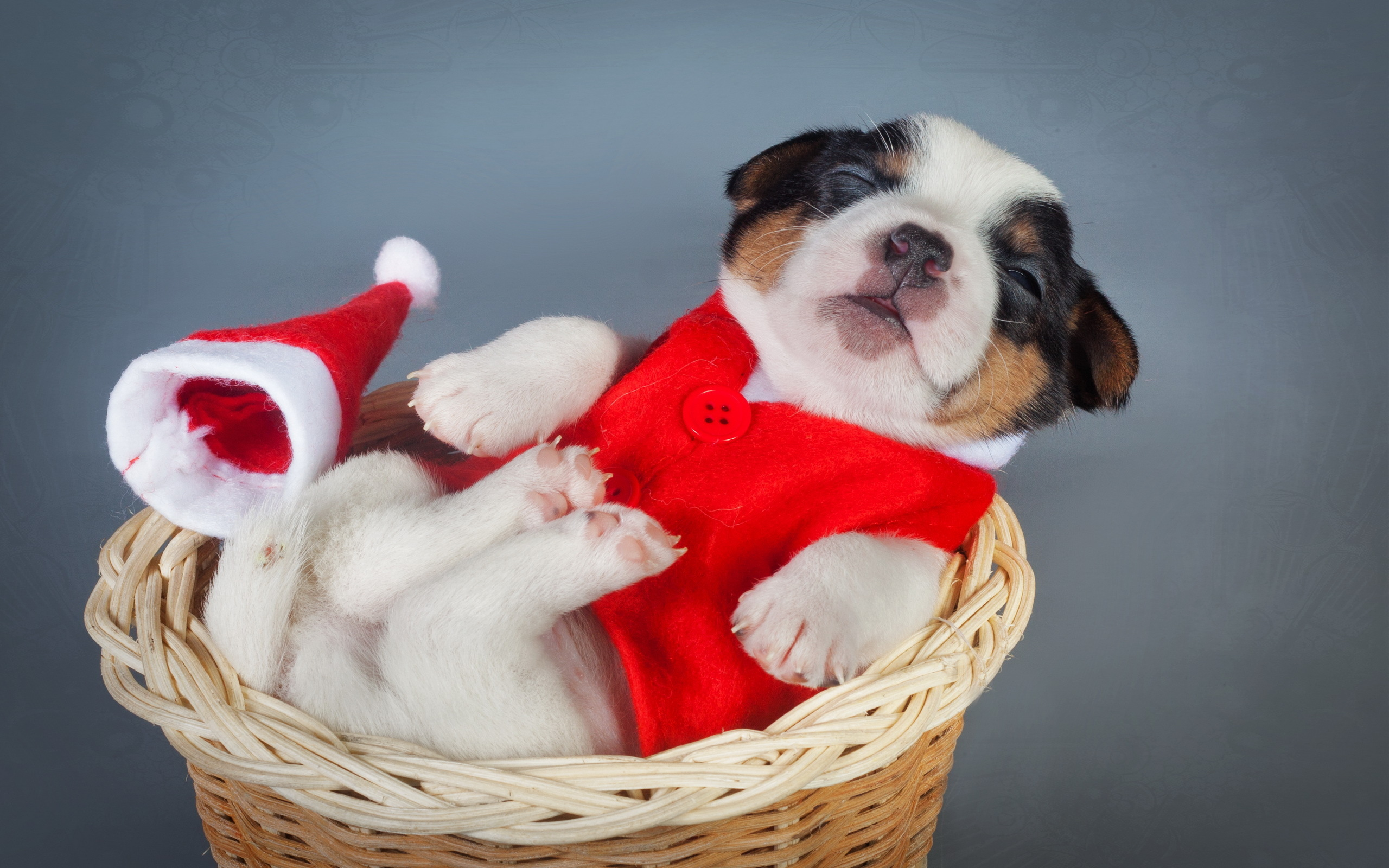 dogs-christmas-new-year-puppy-animals-wallpaper-1.jpg