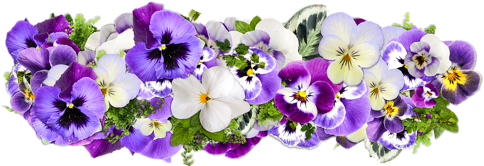 flowers-2058090_960_720.png