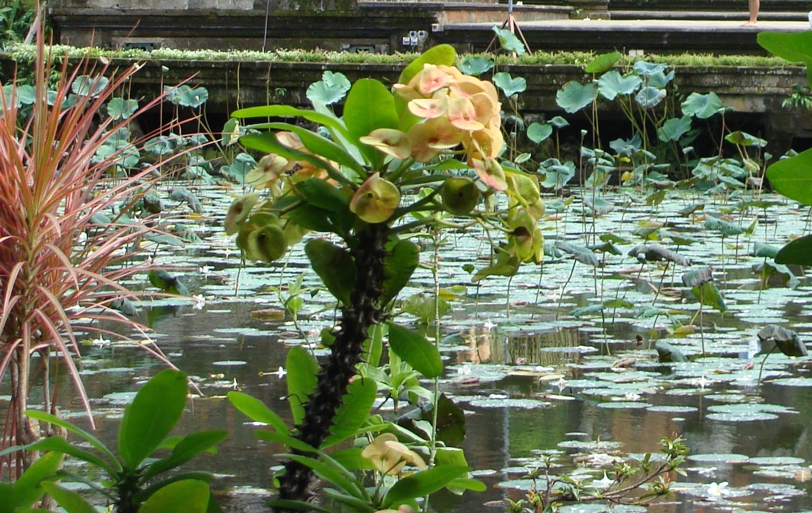 Frog_pond.JPG
