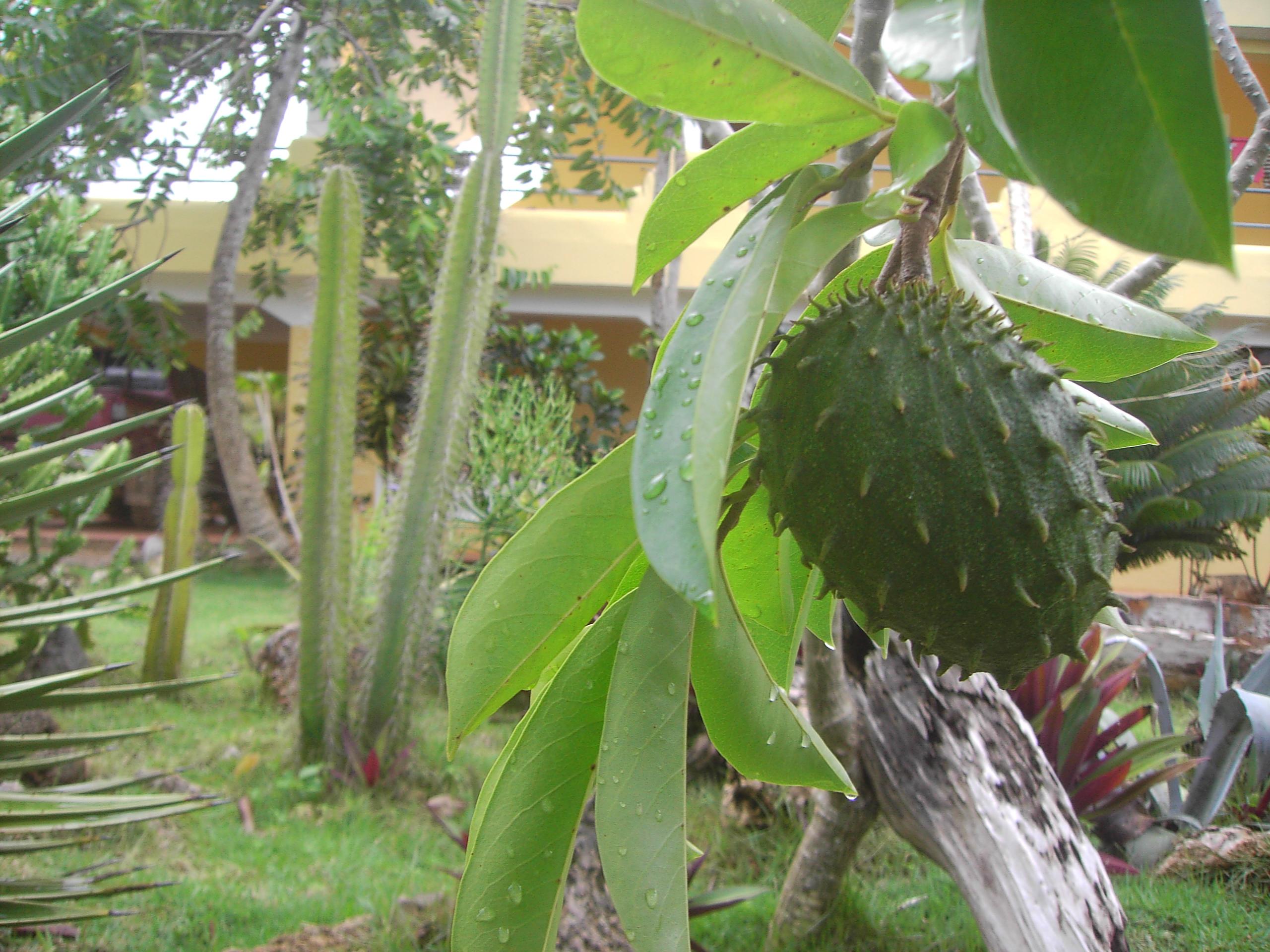 guanabana-soursop-smoothie.jpg