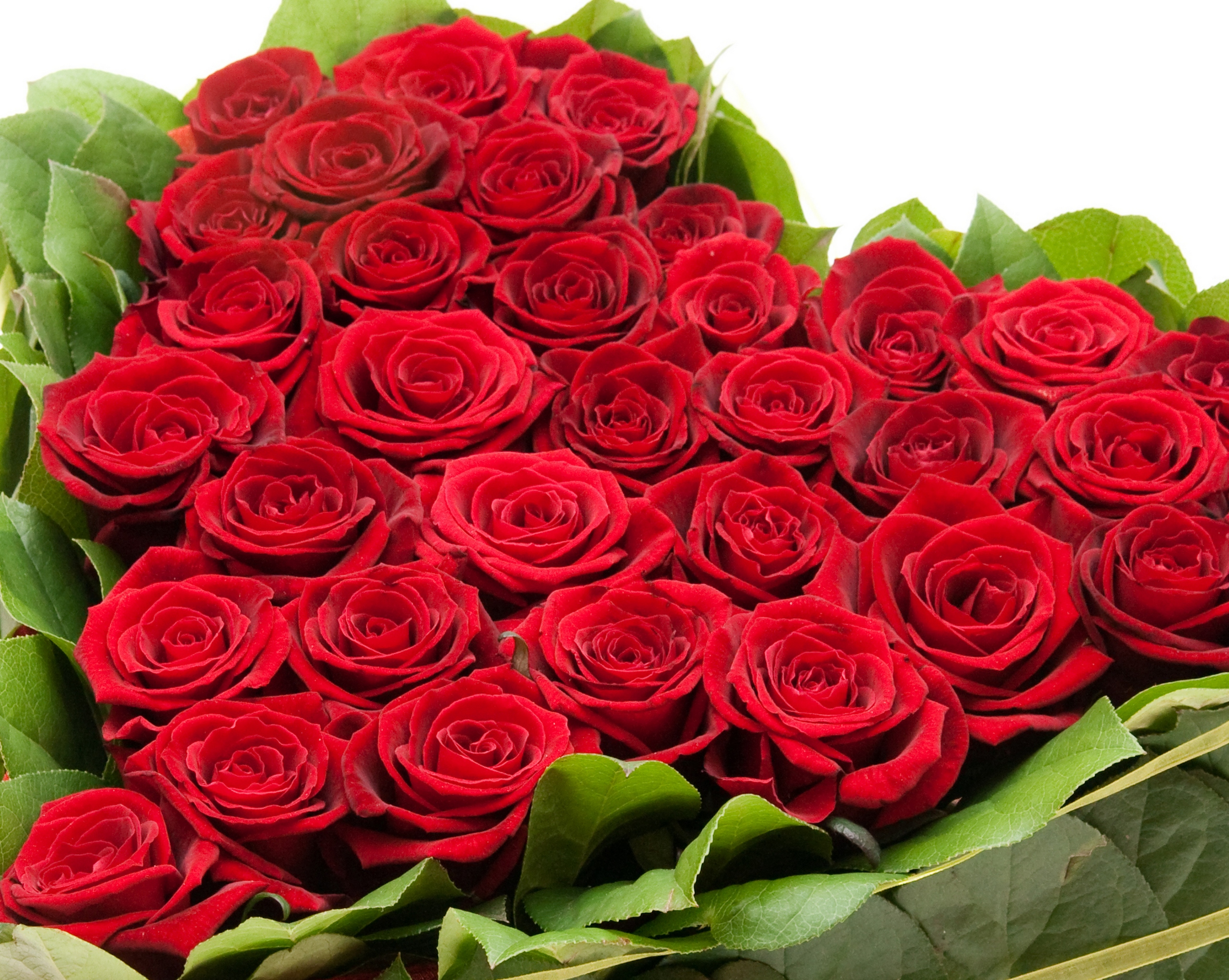 Holidays___International_Womens_Day_Bouquet_of_red_roses_on_March_8_for_girls_058035_.jpg