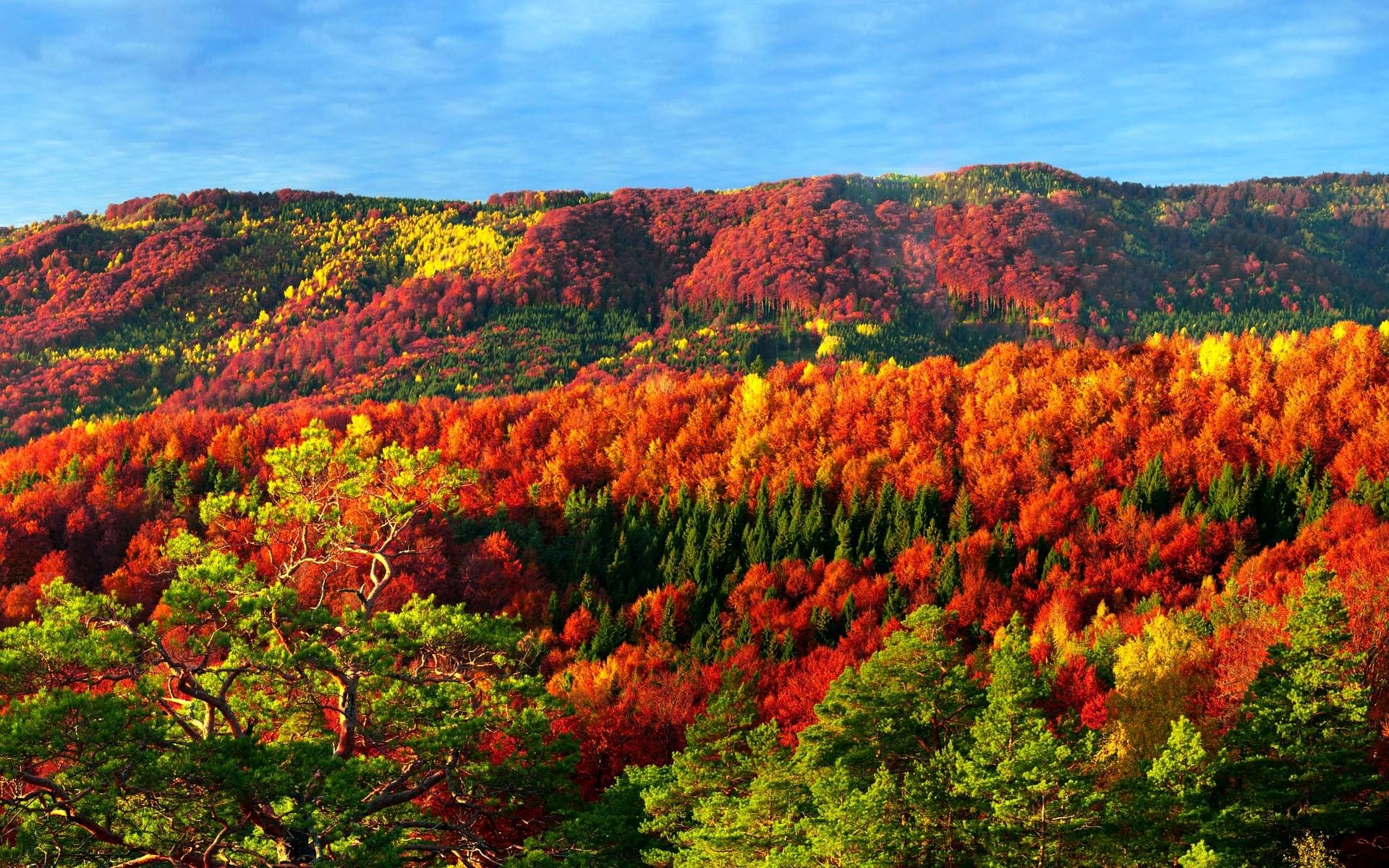 kartinki24_ru_autumn_153.jpg