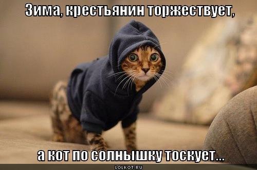 kot-toskuyet_1351169194.jpg