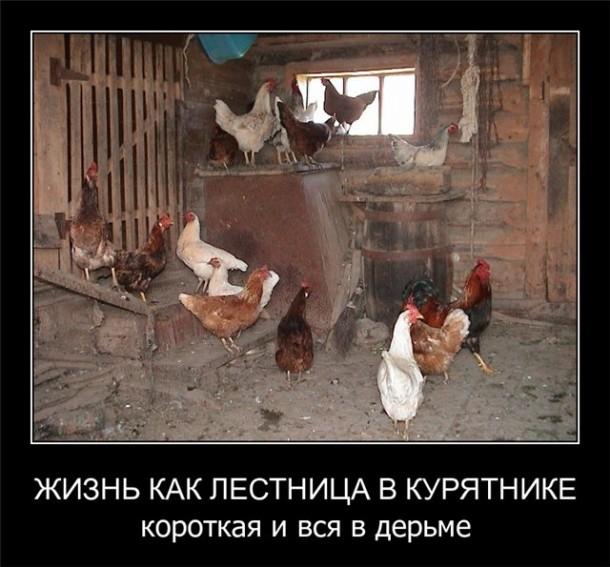 Lestnica-v-kuryatnike-610x567.jpg