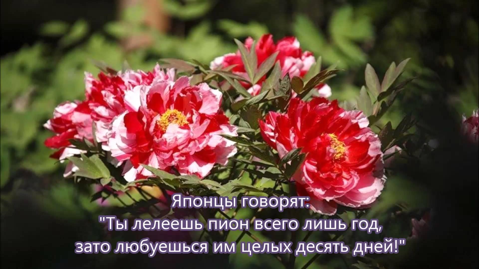 Снытко лариса владивосток отзывы 17 фотография