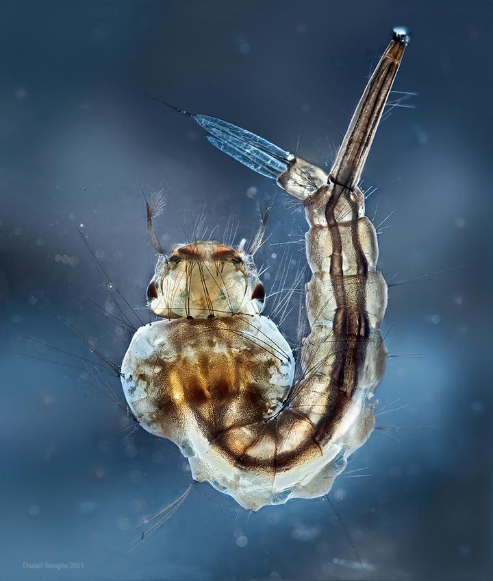 mosquitobf2-X2.jpg