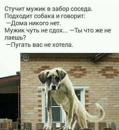 ne_khotela_pugat_500.jpg