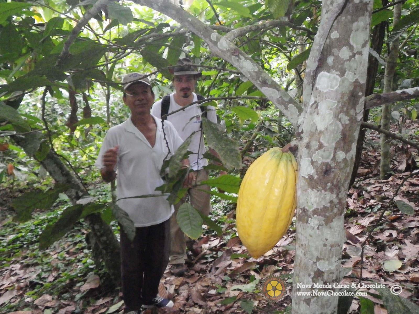 organic cacao.jpg