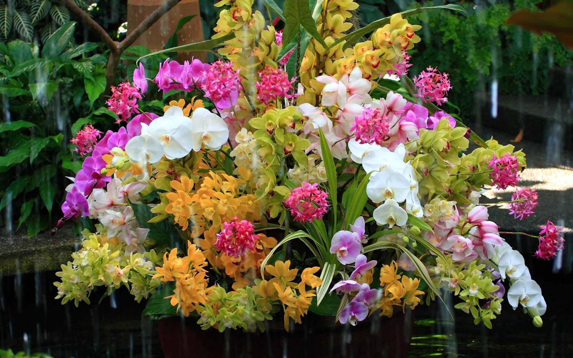orhidei_cvety_buket_voda_ekzotika_45696_1920x1200.jpg